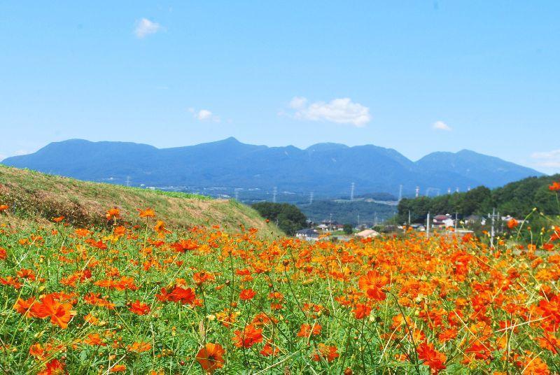 kosumosu143.jpg