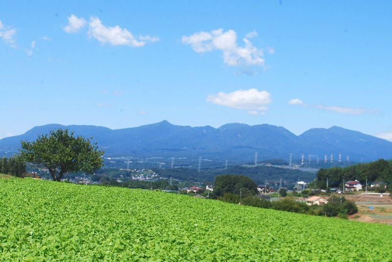 kosumosu144.jpg