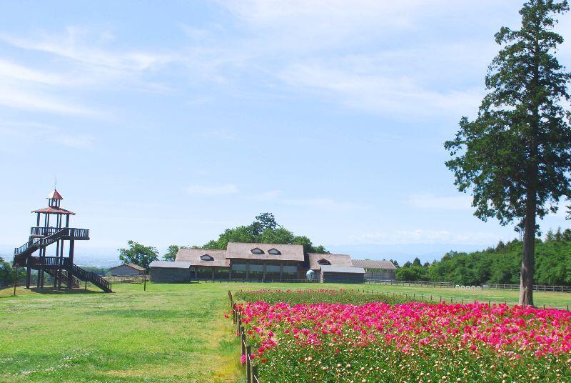 syakuyaku33.jpg