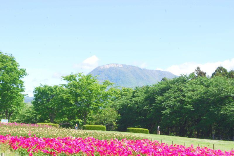 syakuyaku37.jpg